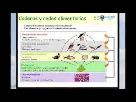 importancia de las cadenas alimenticias y redes troficas niveles troficos e importancia del flujo de energia y