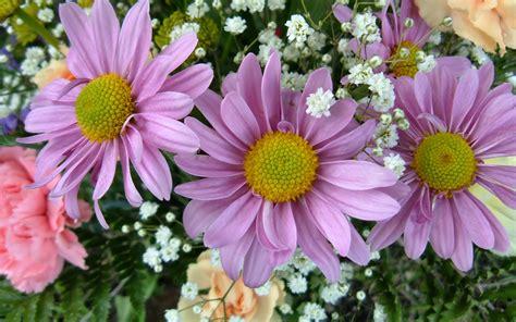 Wallpaper Flowers 3 3 pink flowers wallpapers hd wallpapers id 5572