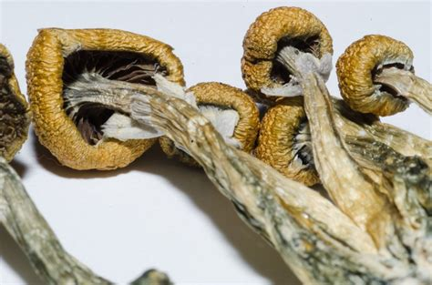 best psychedelic mushrooms benefits of microdosing with lsd and psilocybin mushrooms