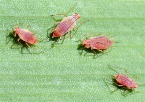 vegetable garden pests identification - Identify Garden Pests