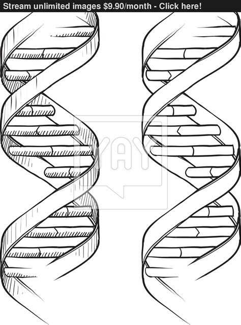 draw helix illustrator dna double helix sketch vector yayimages com