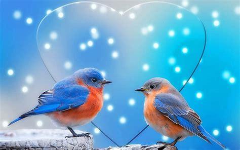 lovebirds wallpaper wallpapertag
