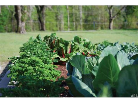 fall garden crops tips for cool fall garden crops
