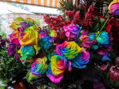 jual biji benih bibit bunga mawar import pelangi