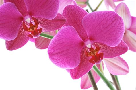 imagenes de flores naturales orquideas orqu 237 deas un mundo de cosas
