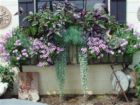 window box ideas for shade window box flower ideas uk home intuitive