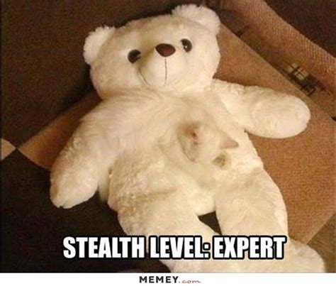 Meme Teddy Bear - 50 most funny camouflage meme pictures and images