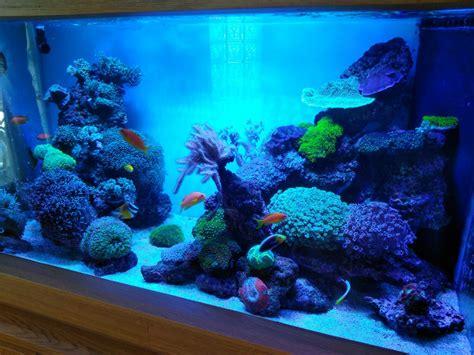 led aquarium lights for reef tanks south reef tank atlantik v4 orphek