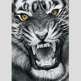 Half Lion Half Tiger Art | 900 x 1277 png 2431kB