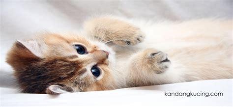 Keranjang Untuk Kucing hal hal yang diperlukan untuk merawat kucing