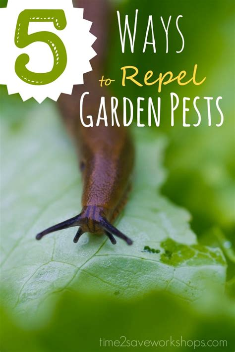 vegetable garden insects ways to repel vegetable garden insects