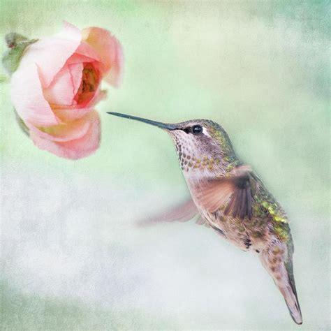 78 best images about hummingbirds on pinterest bottle