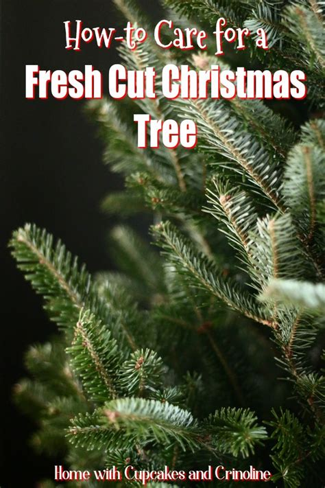 how to care for a fresh cut christmas tree in florida how to care for a fresh tree home with cupcakes and crinoline