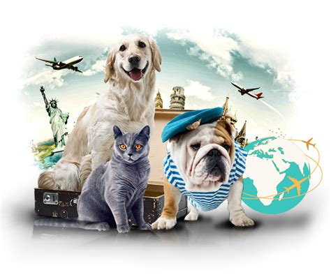puppy shipping services home boarding shipping pets animal dogs cats shipment by air