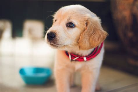 new puppy tips new puppy diet tips feeding them right pet nanny