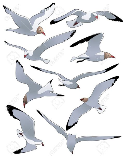 drawings of a sea bird clipart best seagull birds clip art cliparts