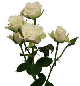 Types Of Garden Roses - best 25 spray roses ideas on pinterest