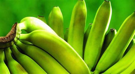 Bibit Pisang Ambon Dengan Rasa Yang Sangat Manis teknik jitu budidaya pisang yang praktis dan menghasilkan banyak buah budidayakita