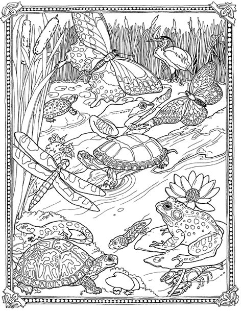 coloring pages of pond animals lilypad pond