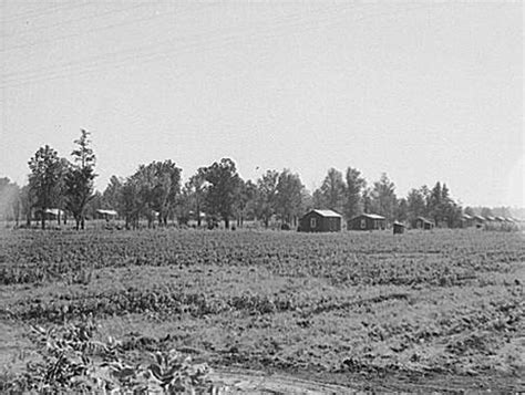 harvesting plantations in tarkeeth state cooperative farming in mississippi mississippi history now