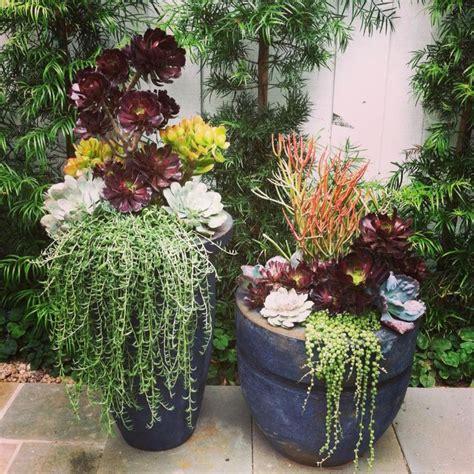 planters for succulents succulent planters by simply succulent succulent