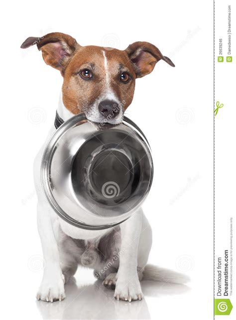 hungry puppy hungry food bowl royalty free stock image image 26639246