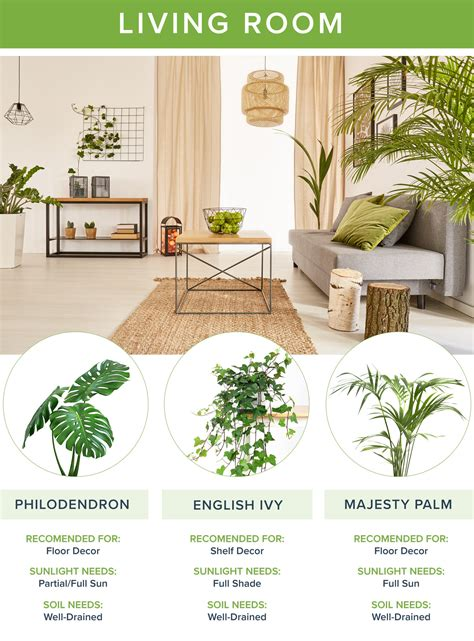 best living room plants the best houseplants for every room going2natural