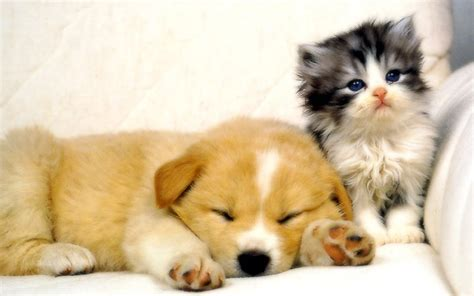 puppy and cat my top collection and cat wallpapers