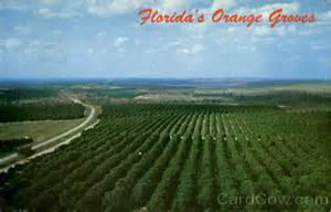 florida s orange groves citrus tower fl
