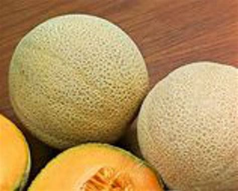 Cantaloupe Shelf by 17 Best Images About Things Growing In Garden 2014 On