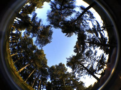 Fish Lens by 10 Top Images Given A Fisheye Twist Ephotozine
