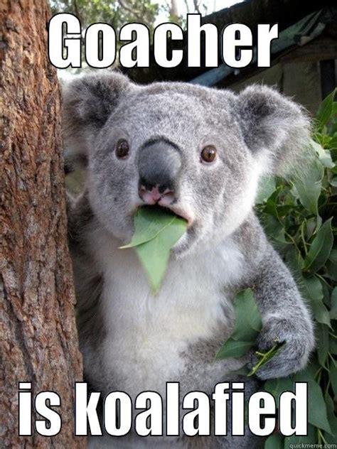 Angry Koala Meme - sad koala bear meme www imgkid com the image kid has it