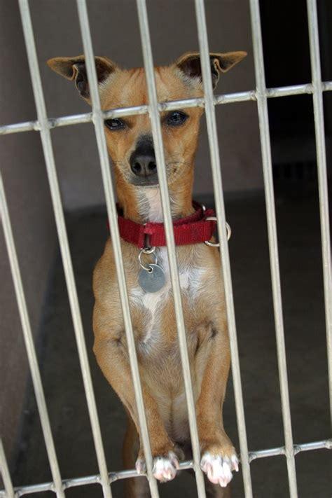 prison dogs prison dogs doggies