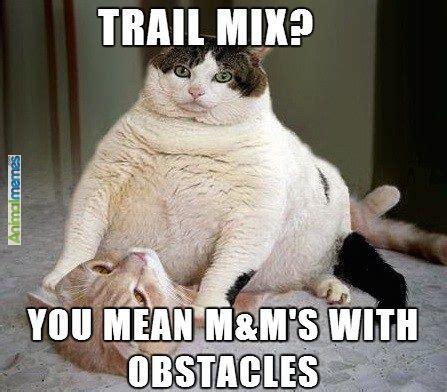 Funny Feel Better Memes - feel better soon cat meme google search cuteness