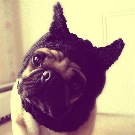 pug says batman did somebody say batman dogs make me happy pug costumes and fashion