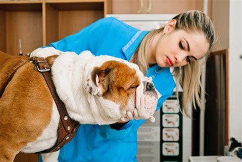 femme saute par chien suivez les conseils de polytrans pour soigner votre chien