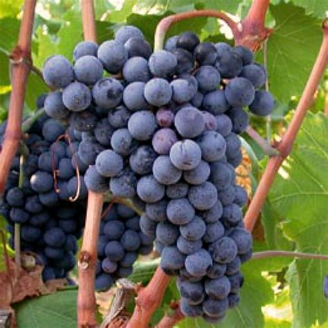 a sicilian experience wine travel food wtfa grape edventures books west sicily wine tour with sommelier delicious italy