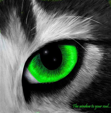 cat eye color color splash of fame colorado high school