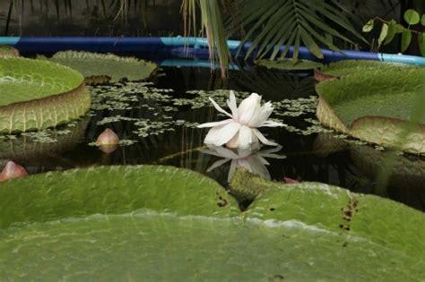 videoclub el jardin florece el mayor nen 250 far de espa 241 a natura elmundo es