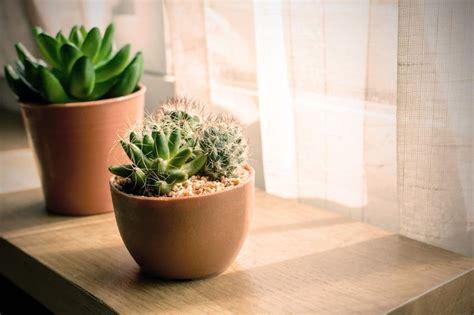 easy  grow houseplants living  spending