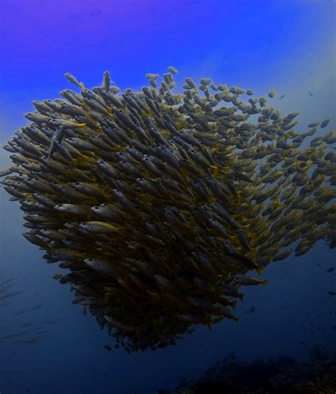 blue dive diving el nido philippines blue dive seafari