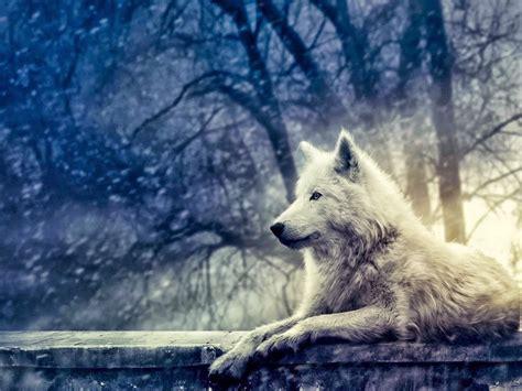 imagenes full hd de lobos wallpapers lobos full hd fondos de pantallas wallpaper