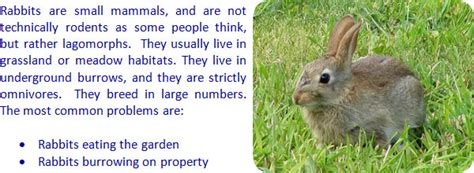 getting rid of rabbits in backyard getting rid of rabbits in backyard 28 images how to keep rabbits out of your lawn