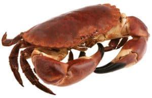 Cuisson Dormeur by Cuisson D Un Tourteau Crabe Temps De Cuisson Et Recettes