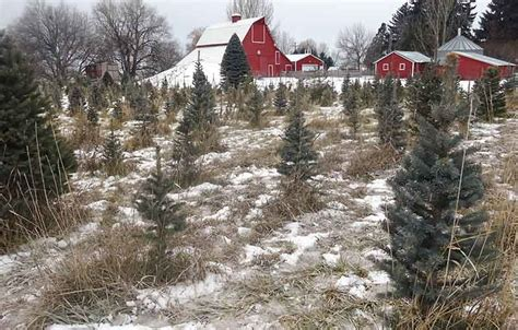 where to get a fresh cut christmas tree in east idaho
