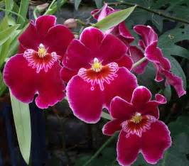 Tropical Rainforest Types Of Plants - ten amazing rainforest plants ecorazzi