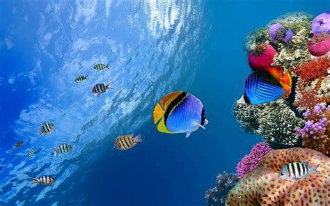 underwater themes for windows 10 coral windows 10 theme themepack me