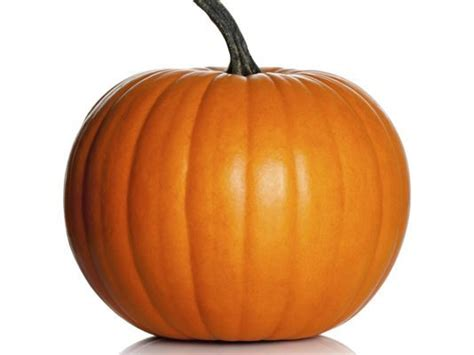a pumpkin why you should feed your pets pumpkin