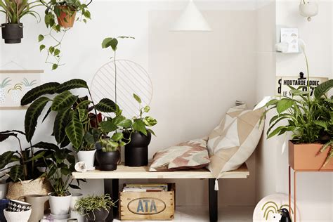 indoor plants     house plants  homes