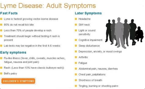 what are the symptoms of lyme disease in dogs lyme disease symptoms signs of lyme disease find info